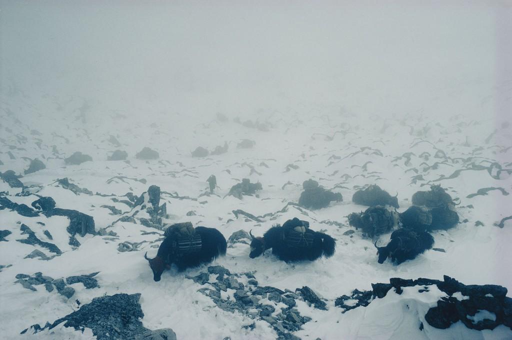 Himalaya Eric Valli