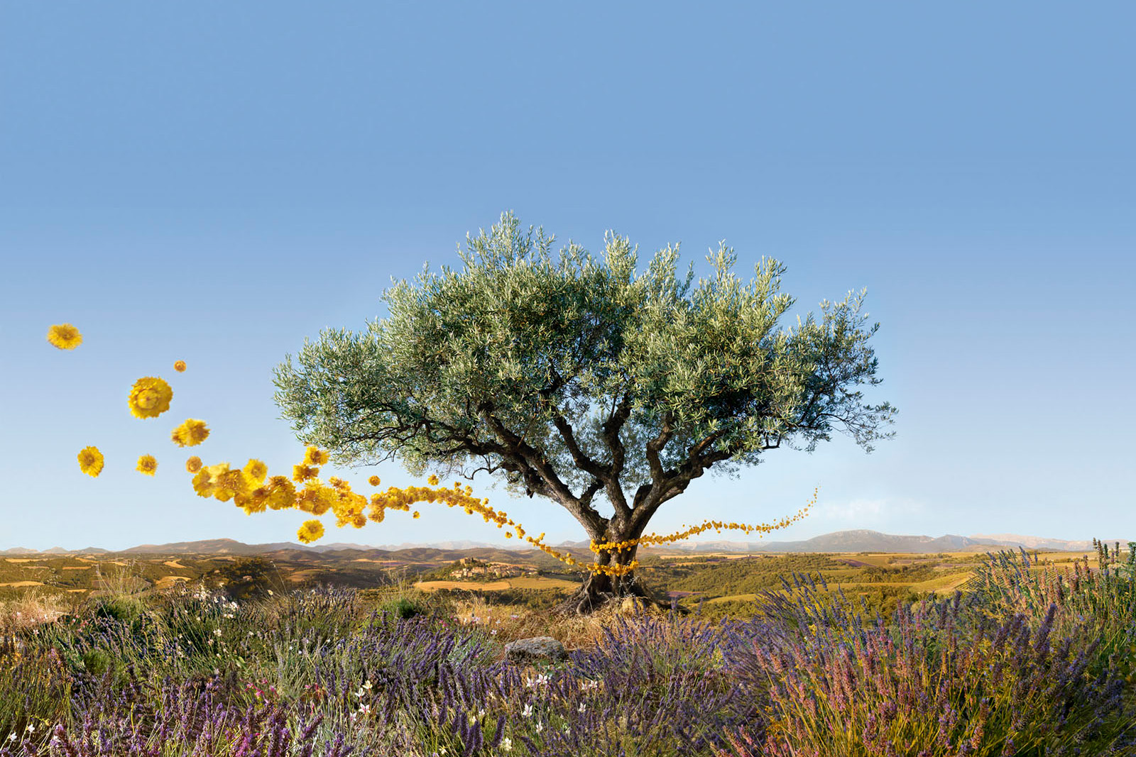 Occitane Eric Valli Photo